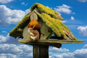 リスの木の家